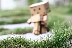 (sⓘndy°) Tags: sanfrancisco toy toys figure figurine sindy kaiyodo yotsuba danbo revoltech danboard 紙箱人 阿楞 amazoncomjp