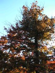 Fall Colors Boulder   DSCN0514