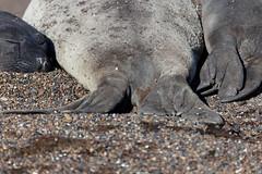 baudchon-baluchon-elephants-10