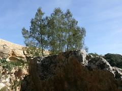 Il-Maqluba, Qrendi, Malta (leslievella64) Tags: leica trees nature europe mediterranean eu malta leslie maltese hollow malte carob qrendi doline araar vlux1 gharghar lesievella64 ilmaqluba