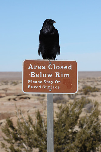 Raven Photo Op