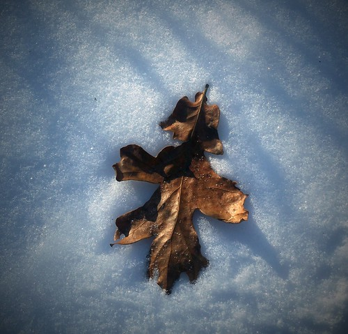 a leaf on the snow