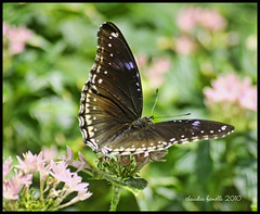 See you later! (Photography by Claudia Fanelli) Tags: butterfly bug mariposa