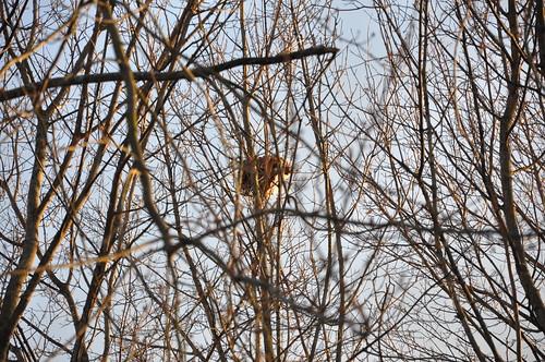 Bird's Nest #3