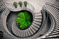 Green (Ame Otoko) Tags: sanfrancisco winter plant abstract green stairs circle spiral nikon pattern artistic center embarcadero 365 d90 explored