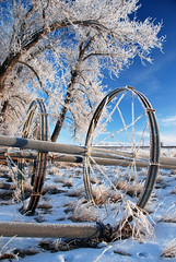 Winter in Milk River 17 (Zbigniew Lewandowski) Tags: blue winter sky canada river town milk frost filter alberta polar hmc hoya