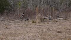 L1050181 (aranreo) Tags: island scout tkf karankawa