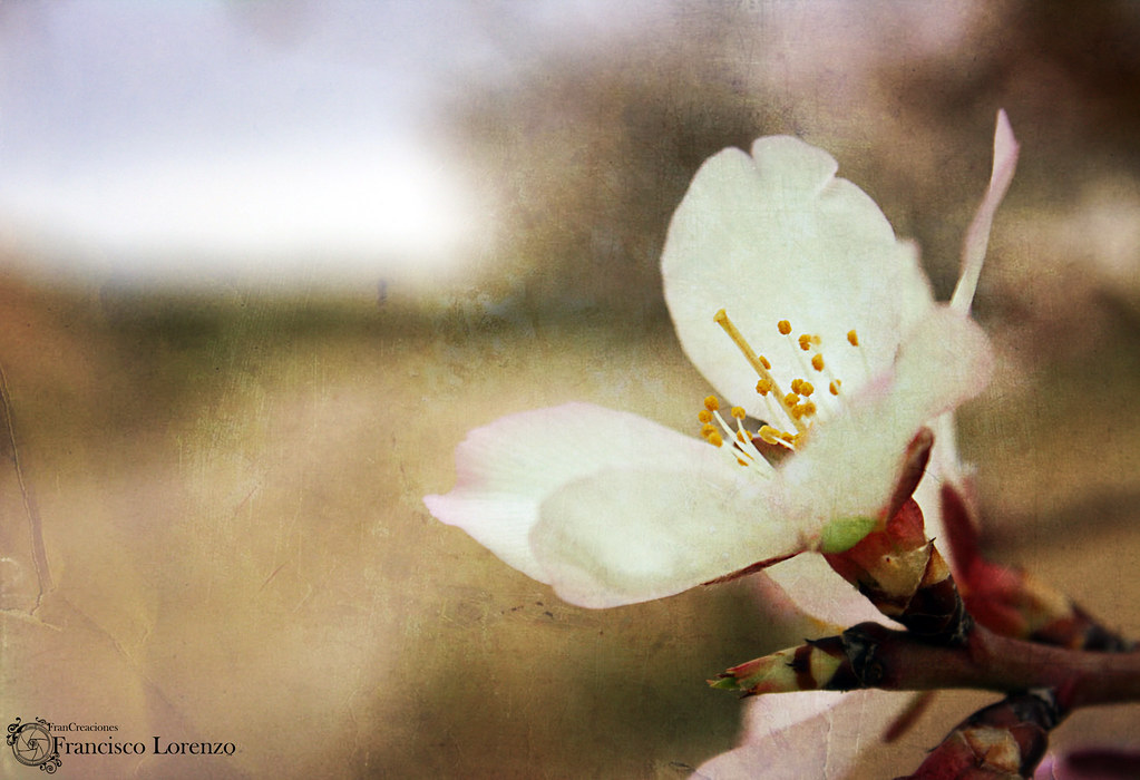 Flor de ayer, Fruto de hoy