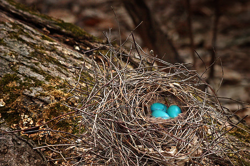 nest2b