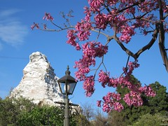 Beautiful pink blossoms frame the Matterhorn. (03/31/2010)