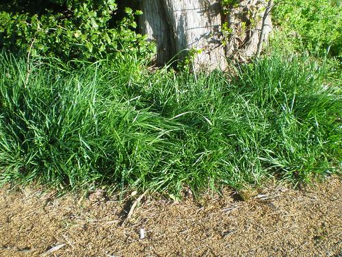 Grassy green