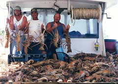 Steve Kern, Cesar Davila, and Allan Schutte - giant catch of giant lobster