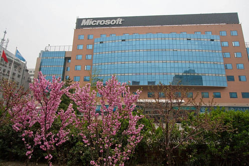 Early blossoms outside Microsoft