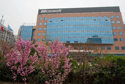 Early blossoms outside Microsoft