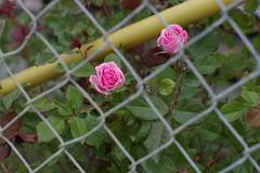 FlowerJail
