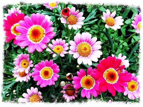 [167/365] Flowers by goaliej54