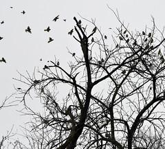 birds tree winter silhouette flying