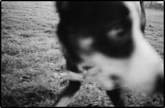 A Dog's eye view. (colster.) Tags: blackandwhite dog up closeup 35mm fuji close xa2 400 neopan oympus fujineopan blackwhitephotos thelittledoglaughed colster