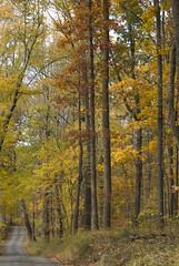A dirt path in beautiful Virginia