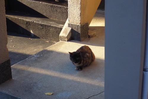 Today's Cat@20091103