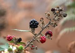 The Death of Autumn (Chris Illman) Tags: bbc thelodge rspb autumnwatch