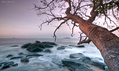 Old Tree (Kento973) Tags: longexposure pink tree beach water rose rock photoshop sand nikon eau raw nef magenta sable bleu arbre plage rocher lightroom branche d300 10mm ecorce frenchguiana poselongue guyanefranaise kento973