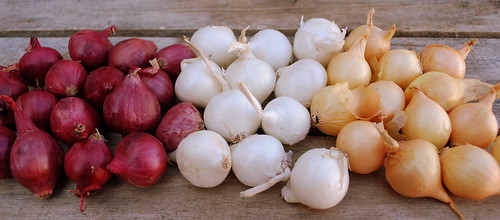 Balsamic onions ina row