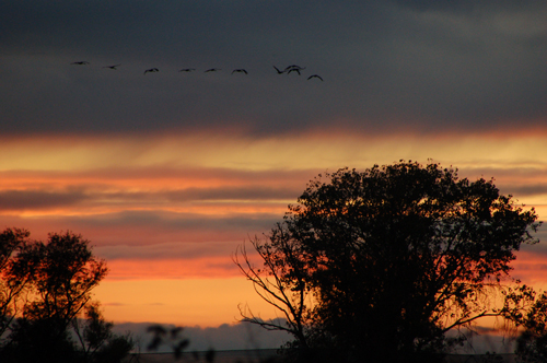 8flying-over-sunset.jpg