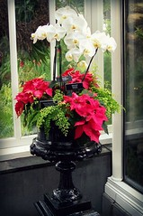 orchids as holiday decor