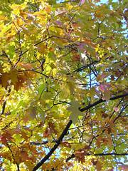 Fall Colors Boulder   DSCN0291