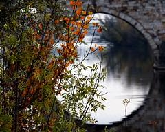 HOJITAS DORADAS (Licy (Iris de Paz)) Tags: río hojas zamora duero vosplusbellesphotos tff1 atomicaward