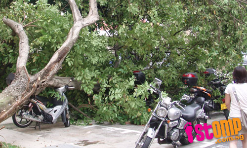 Tree topples and lands on motorcycles in Pasir Ris carpark