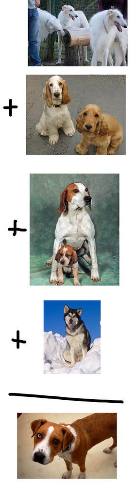 dogmath
