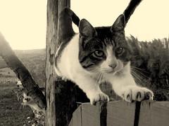 Raquel (PaoLx) Tags: chile camera summer patagonia mountain flower primavera film digital cat fuji farm south flor kitty gato finepix campo felino sur montaa granja coyhaique impressedbeauty s1000fd thecatwhoturnedonandoff