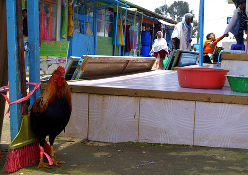 El gallo de Enkutatash. Shiro Meda. Addis Abeba