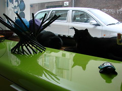 Window Decorations (indigo_jones) Tags: cats black holland green window netherlands kat utrecht lola nederland warmth luna heat radiator gatti poezen blackcats raam