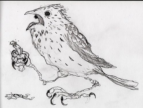 cornbird