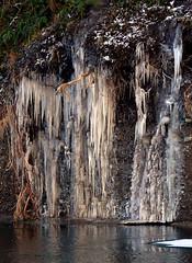 Icicles (elaineh601) Tags: cold ice water river flow frozen derwent freezing freeze cumbria icicles camerton workington riverderwent
