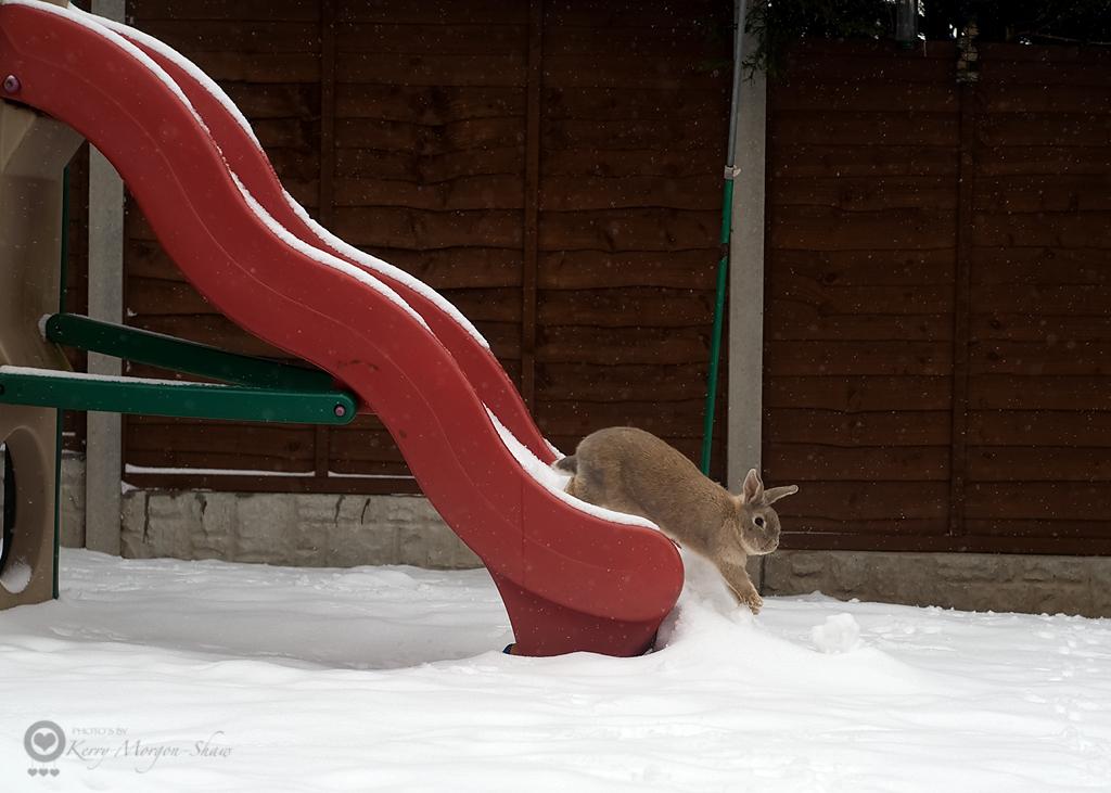 The amazing sliding bunnny!