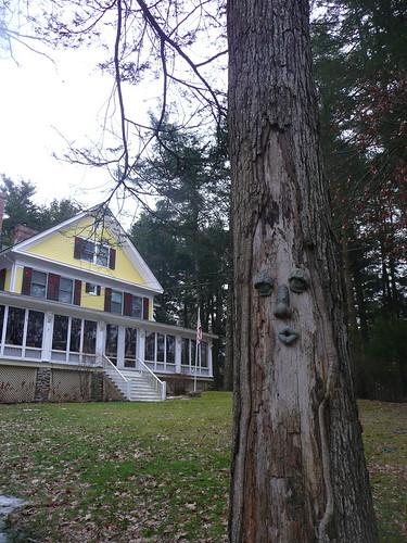 freaky tree!