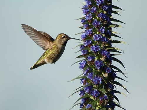 Hmm... Humming Bird !!