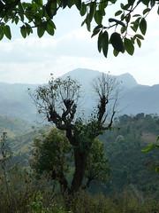 Trekking Kalaw (frischifresh) Tags: trekking myanmar kalaw