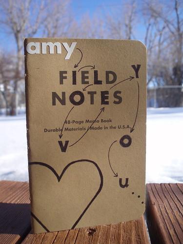 amyfieldnotes