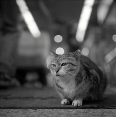 1002_snap-05_004 (cybercynic) Tags: cats tlr blackwhite tsuenwan 荃灣 mamiyac330f