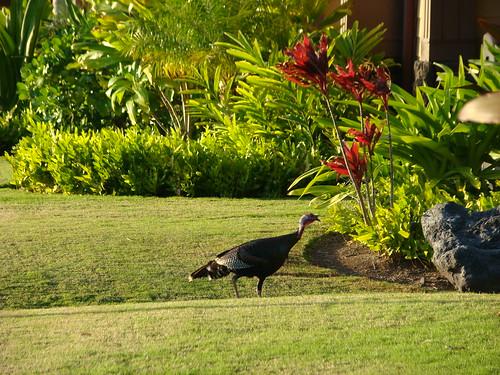 Hawaii 2010 019