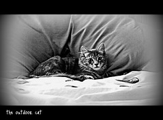 the outdoor cat (MudMapImages) Tags: bed kitten outdoor critter comfy spoilt thelittledoglaughed cuteas