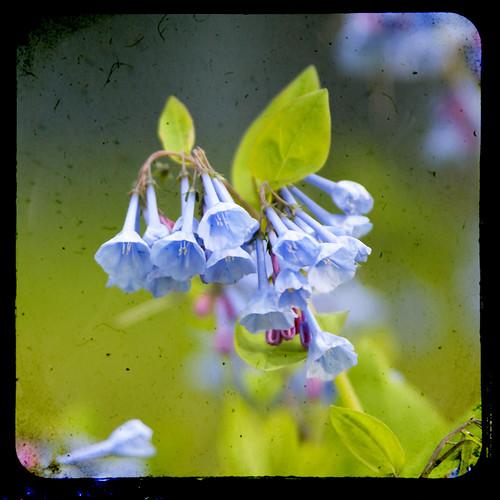 05-08-11 flowers 24 by The Shutterbug Eye™