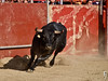 Novillo (FJimenez92) Tags: festival toros bullfight elescorial pablolechuga ivanvicente sergioaguilar adolforamos victorpuerto