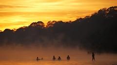 A new dawn  .  .  .  bathed in gold (ericrstoner) Tags: fog sunrise amazon xingu indígena kamayurá parqueindígenadoxingu kamaiurá bemflickrbembrasil brasilemimagens