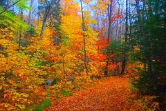 A walk in the woods (Let Ideas Compete) Tags: park autumn trees wallpaper canada color colour fall colors leaves forest saturated woods october colorful colours spectrum screensaver path montreal canadian hike foliage trail hues colourful tremblant mont forests enhanced monttremblant treblant monttreblant